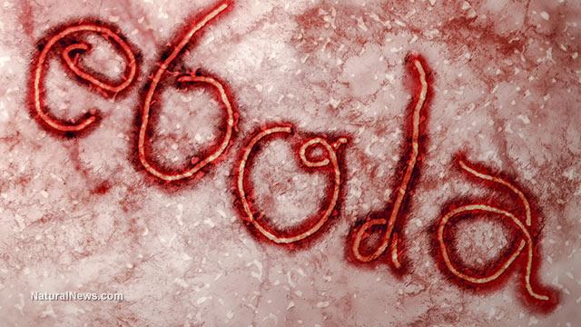 Ebola.com je na prodej - kdo ji první dostane? 1
