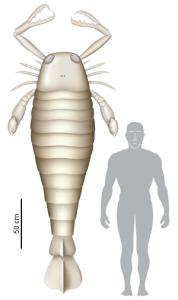 Jaekelopterus 1