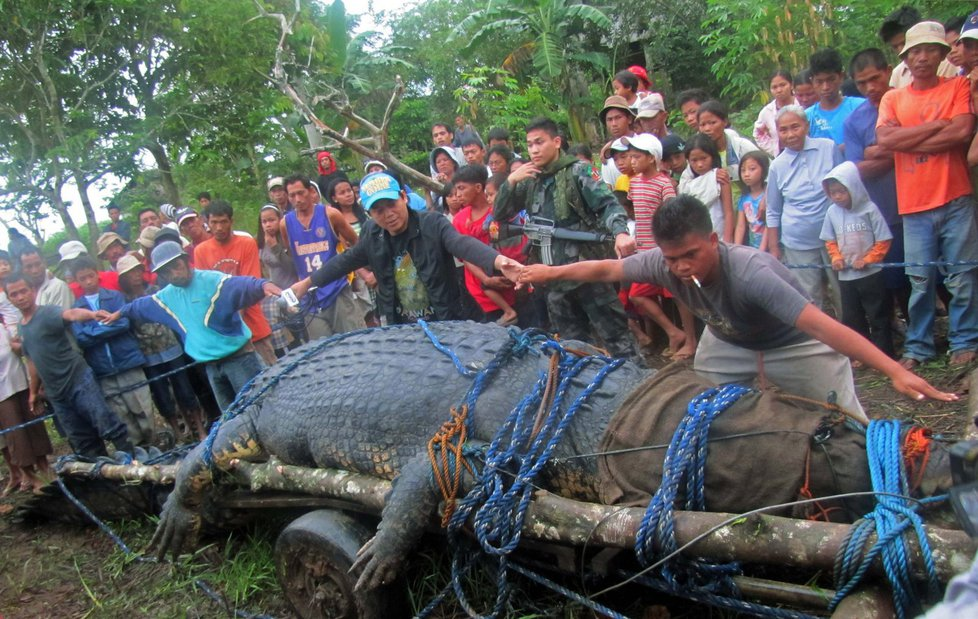 1005049-img-krokodyl