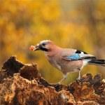 Evropa přišla o stovky milionů ptáků
