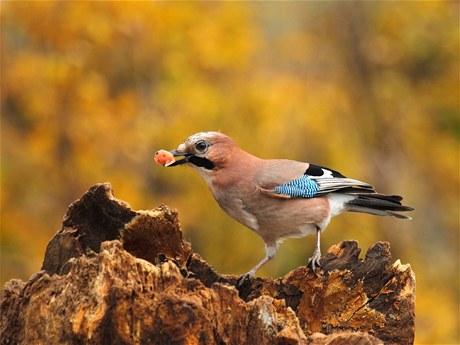 Evropa přišla o stovky milionů ptáků 1