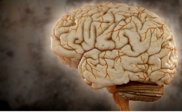 crop-488936-mozek