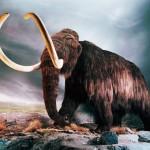 Mamuti mohou znovu kráčet po Zemi už letos 2