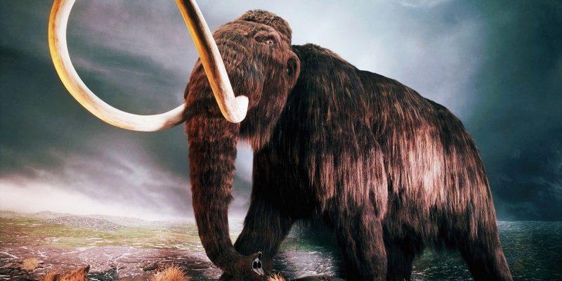 Mamuti mohou znovu kráčet po Zemi už letos 1