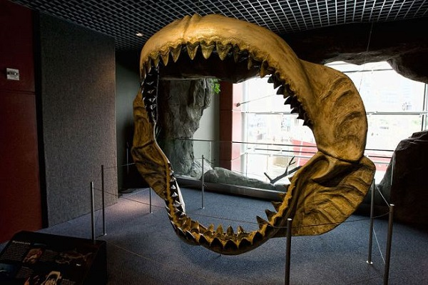 megalodon-jaw-reconstruction