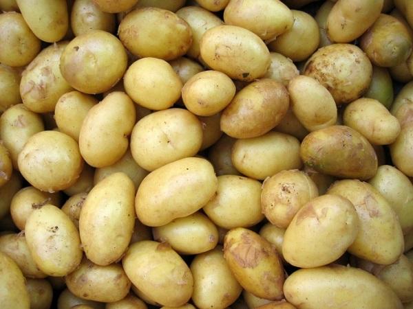 brambory_201305190935347
