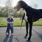 Psi, které byste přítelkyni do kabelky rozhodně nedaly