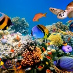 Konečně zajímavé Selfy: Hezké ženy a mořské příšery