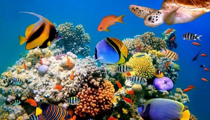 Konečně zajímavé Selfy: Hezké ženy a mořské příšery 1