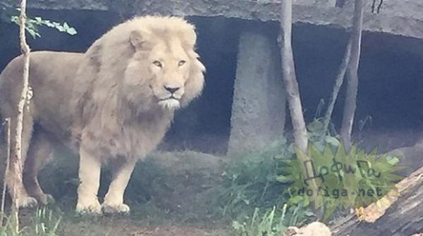 V ulicích běhali hroši, tygři i lvi 1