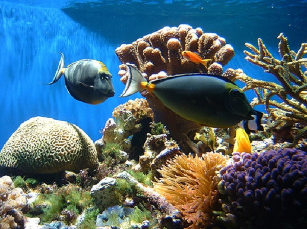 coral-reef-koralovy-utes-1
