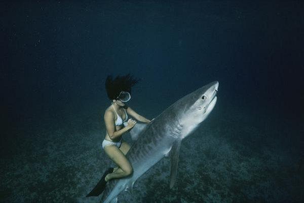 Žralok jako vodní skútr? Tito lidé jsou šílenci 1
