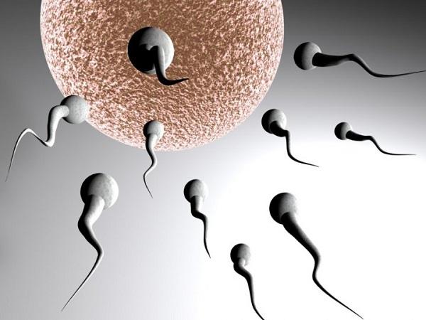 spermie-1