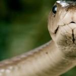 Hadi, kteří přecenili svůj apetit