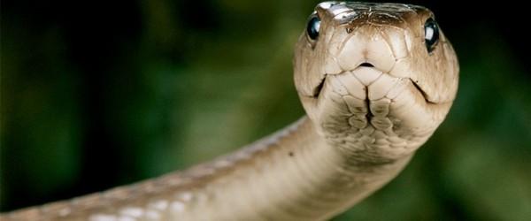 Hadi, kteří přecenili svůj apetit 1