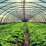 Budoucnost stravování: rostliny budeme pěstovat pod vodou