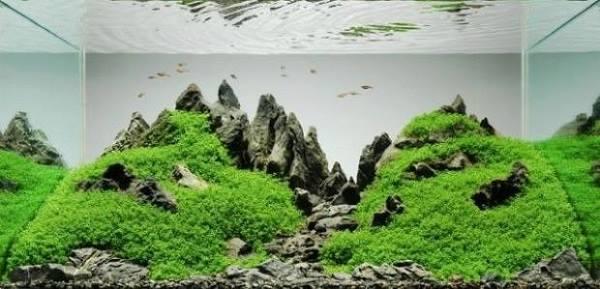 Úžasné akvária, do kterých se zamilujete 1