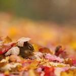 Tolik radosti! Zvířata si užívají podzim
