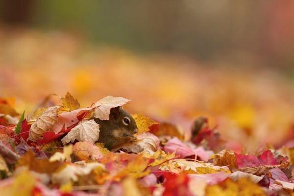 Tolik radosti! Zvířata si užívají podzim 1