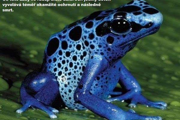 Amazonský prales vědce nepřestává šokovat. Překvapí i vás? 1