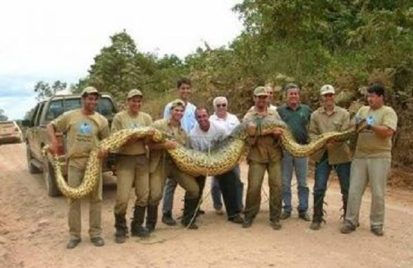 35 metrové amazonské anakondy: jsou skutečné? 1
