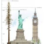 Hyperion, nejvyšší strom světa, seznamte se 6