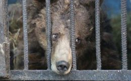 Nejsmutnější zoo světa: sem byste rozhodně zavítat nechtěli 9