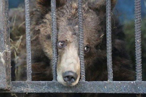 Nejsmutnější zoo světa: sem byste rozhodně zavítat nechtěli 1