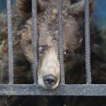 Nejsmutnější zoo světa: sem byste rozhodně zavítat nechtěli