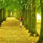 Rostlinná magie - zachraňuje naše zdraví, klima i čas 2