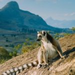 MADAGASKAR - ZEMĚ LEMURŮ 4