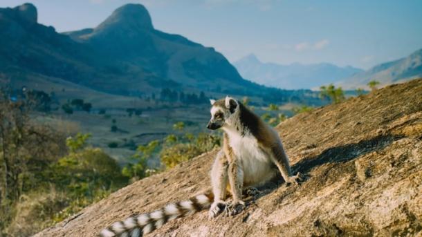 MADAGASKAR - ZEMĚ LEMURŮ 1