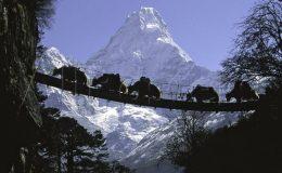 Pozorování přírody v Nepálu 36