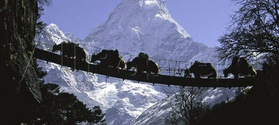 Pozorování přírody v Nepálu 1