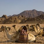 Sinajský poloostrov a Rudé moře 2