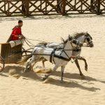 V Chorvatsku vykopali pohřbený římský vozík i s koňmi 7