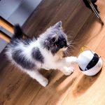 Robot, který zabaví Vaší kočku, když nejste doma 7