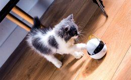 Robot, který zabaví Vaší kočku, když nejste doma 9