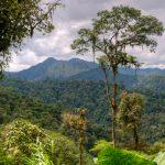 Ekvádor - města i pralesy 2