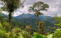 Ekvádor - města i pralesy 7