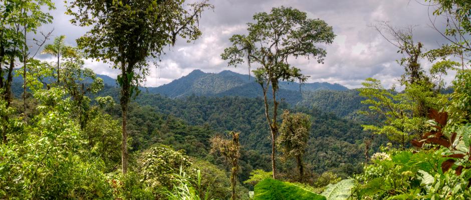 Ekvádor - města i pralesy 1