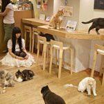 Tipy pro milovníky koček, kam se vydat 16