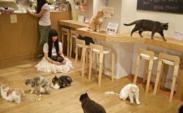 Tipy pro milovníky koček, kam se vydat 9