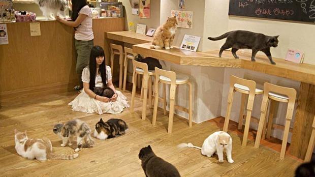 Tipy pro milovníky koček, kam se vydat 1