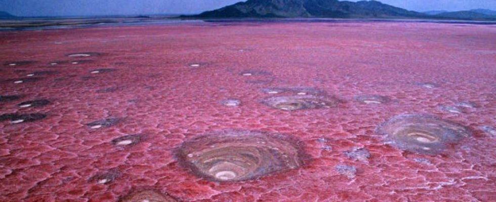 Natrononové jezero v Tanzanii 1