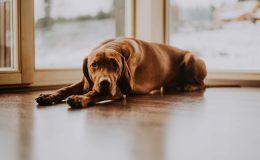 Jak opravit dřevěnou podlahu poškozenou psem 8