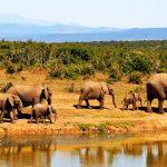 Nejlepší safari rezervace v Africe 2