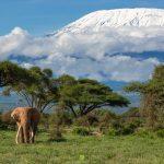 Keňa - nejvýznamnější safari destinace 4