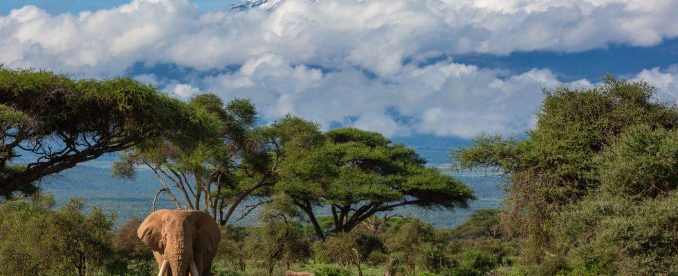 Keňa - nejvýznamnější safari destinace 1