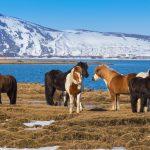 Island z koňského sedla 3